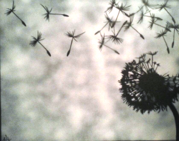Dandelion Canvas painting by Ray Ferrer